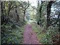SJ5155 : The Sandstone Trail at Little Heath by Jeff Buck