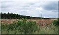 N1520 : Forestry plantation on cut-over bogland by Eric Jones