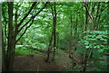 TQ4135 : Woodland by Forest Way by N Chadwick