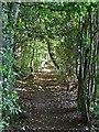 SP9208 : Footpath eastwards into Drayton Wood by Rob Farrow