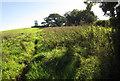 SX3861 : Bridleway to Notter by Derek Harper