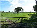 SJ6678 : Footpath(s) entrance to Budworth Heath by Anthony O'Neil