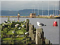 NT2677 : Cormorant perch by M J Richardson