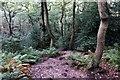 SJ5257 : Path through Peckforton Woods by Jeff Buck