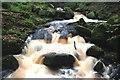 SK2579 : Burbage Brook in Padley Gorge : Week 43