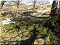 SX7476 : Walls, Emsworthy by Derek Harper