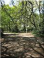 SU4412 : Freemantle Common by Hugh Venables