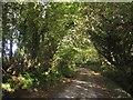 SX3360 : Molenick Lane by Derek Harper