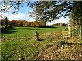 SJ2164 : Field and woodland : Week 46
