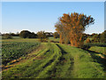 TL6424 : Autumnal hedgerow in arable land,  Great Dunmow  : Week 46