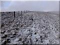 NT1813 : A Ridge Walk : Week 46