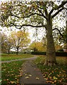 ST5669 : Kings Head Park, Bishopsworth by Derek Harper