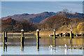 NY3703 : Birds on the jetty : Week 47