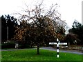 TL4340 : Sign post and tree with orange-coloured hips, Heydon by Bikeboy