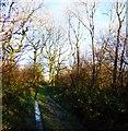 SU9415 : The bridleway through Crown Tegleaze from Upwaltham by Shazz
