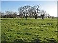 TL3266 : Conington: winter sunlight by John Sutton