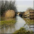SO9031 : Swilgate floods, Tewkesbury : Week 2