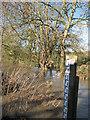 TL3854 : High water at Fox's Bridge by John Sutton