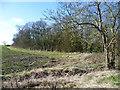 TL3077 : Copse near Old Hurst by Marathon