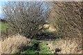 SJ3763 : Path near the Lache Eyes by Jeff Buck