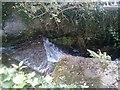 SX4760 : Waterfall, Tamerton Foliot by timothy luckham