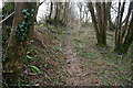 SX5358 : Over grown track from Cann Wood by jeff collins