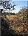 TL3954 : Lord's Bridge: Bourn Brook and a radio telescope by John Sutton