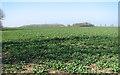 TM3387 : Fields by Uplandhall Farm by Evelyn Simak