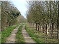 TL2177 : Track in Little Less Wood, Abbots Ripton by Richard Humphrey