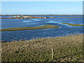TF3601 : Looking over Wisbech St Mary Wash - The Nene Washes by Richard Humphrey
