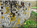 TM3185 : Mosses and lichens on corrugated concrete wall by Evelyn Simak