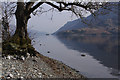 NY3817 : Ullswater shore : Week 13