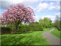 TQ2084 : Flowering Tree, Tokyngton Park by Des Blenkinsopp