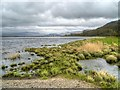 NY2227 : Blackstock Point, Bassenthwaite Lake by David Dixon