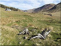 NO0871 : View towards Glen Taitneach by William Starkey