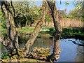 SD4314 : WWT Martin Mere Wetland Centre by David Dixon