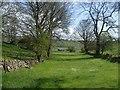 SK1472 : Meadow and trees near Priestcliffe : Week 16