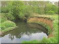 SE3806 : River Dearne riverbank. by steven ruffles