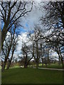 TM1645 : Trees in Christchurch Park by Hamish Griffin