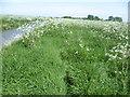 TR2464 : Former footpath alongside Sarre Penn by Marathon