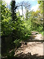 SX3467 : Path by the Lynher by Derek Harper