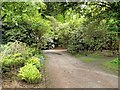 SJ7481 : Tatton Park Gardens, Path Behind The Tower Garden by David Dixon