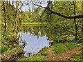SD3688 : Looking across Low Dam by David Dixon