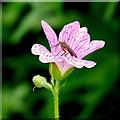 SO6424 : Fauna and flora, 1 : Week 22 winner