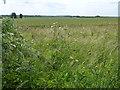 TL5685 : Farmland south of Littleport by Richard Humphrey