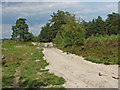 SU8741 : Lowland heath, Hankley Common by Alan Hunt