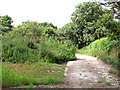 TM2691 : Path past the old sewage works by Evelyn Simak