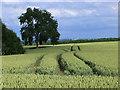 SP3944 : Field of wheat, Hornton Grounds Farm : Week 26