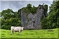 M6512 : Castles of Connacht: Aille, Galway by Mike Searle