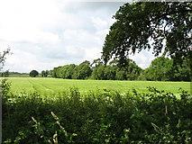 N4118 : Farmland east of Killeigh by David Purchase